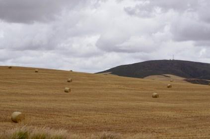 Getreidefeld in Südafrika