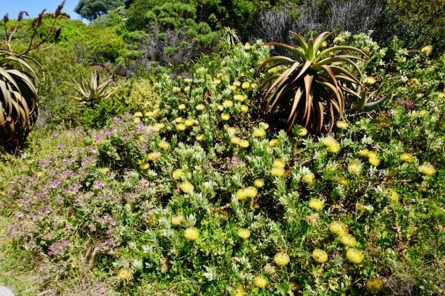 Cliff Path Südafrika