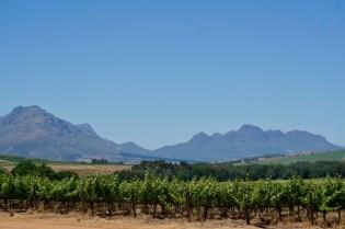 Wein und Berge