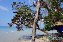 Bäume am Strand in Thailand