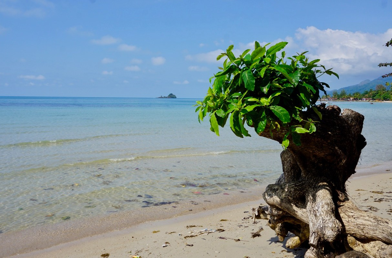 Das Baum und der Golf von Thailand