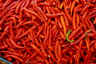 Frischer, roter Chili