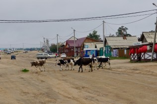 Kühe am Baikal-See