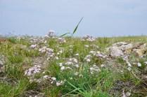 Wildblumen im Juli