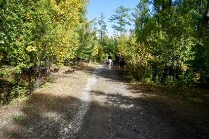 Waldweg in der Mongolei