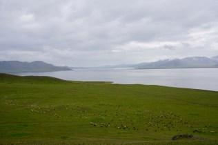 Schafe am See