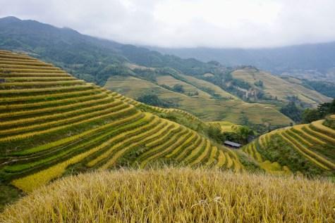 Reisfelder in Guangxi