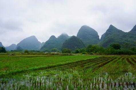 Reisanbau in China