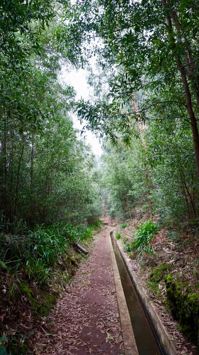 Eukalyptus-Wald in Portugal