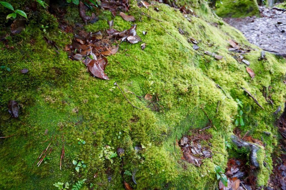 Moos im Regenwald