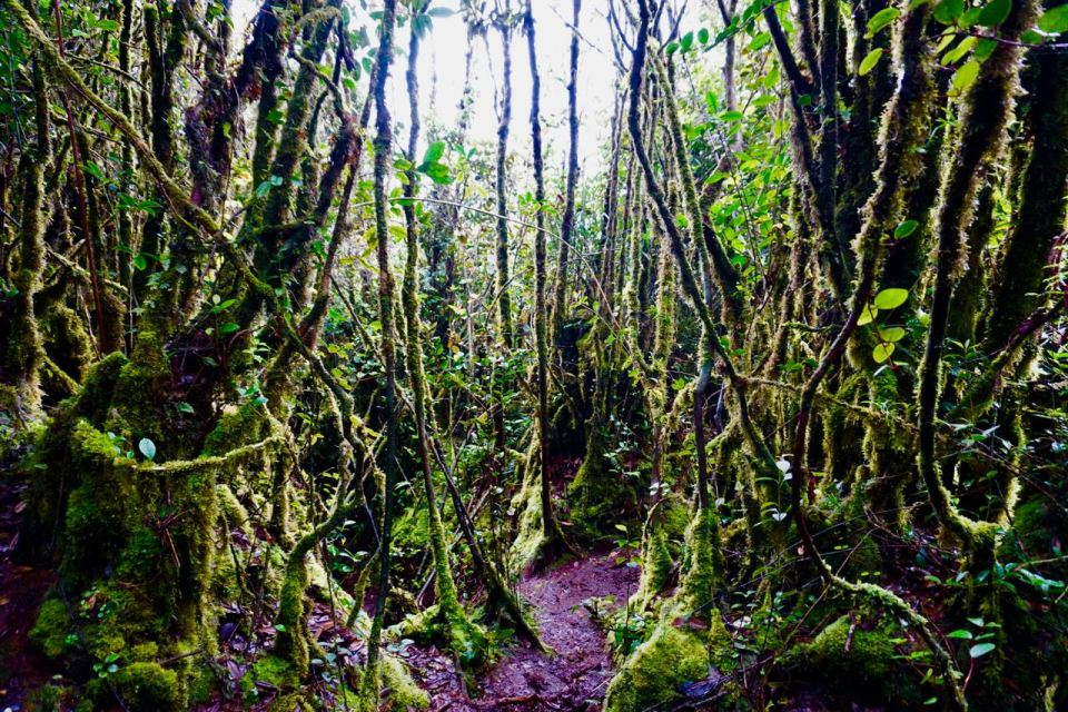 Mossy Forest Cameron Highlands
