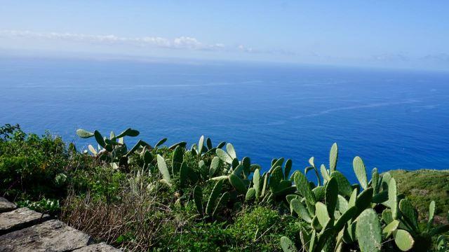 Kakteen-Pflanzen auf Madeira