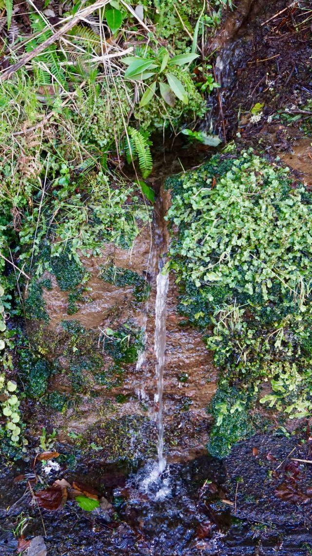 Wasserfall im Januar