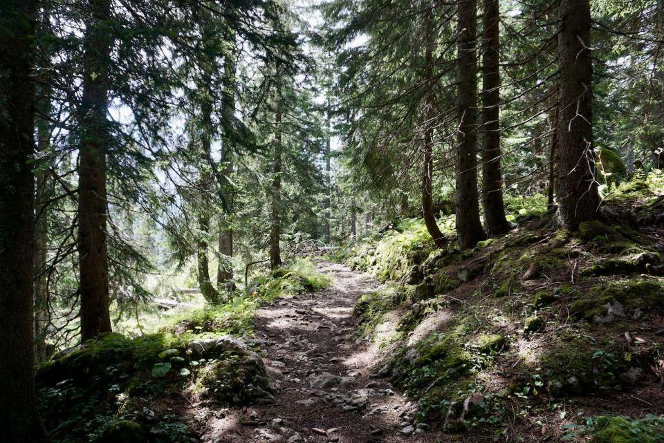 Die letzten Kilometer geht es durch dichten Wald zur Gotzenalm