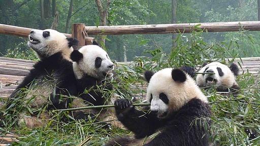 2010-07_china_0052.JPG