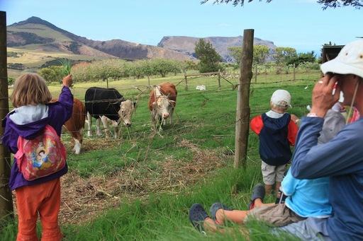 2012-03-01_SaintHelena_farm.JPG.JPG