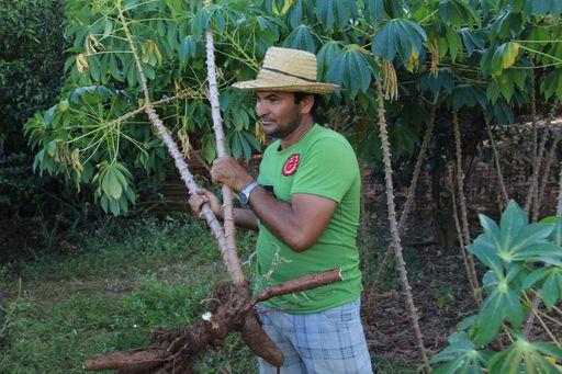 2012-10-10_Brasilien_FernandoDeNoronha_OrganicFarm2.jpg