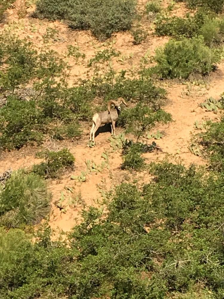 Wildlife in Zion