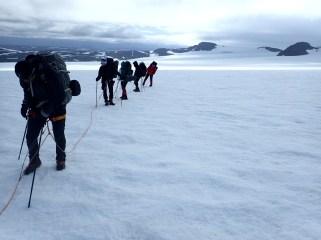Na lodowcu siedem osó musi iść w jednym tempie.