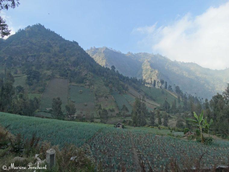 Montagnes verdoyantes aux alentours de Cemoro Lawang