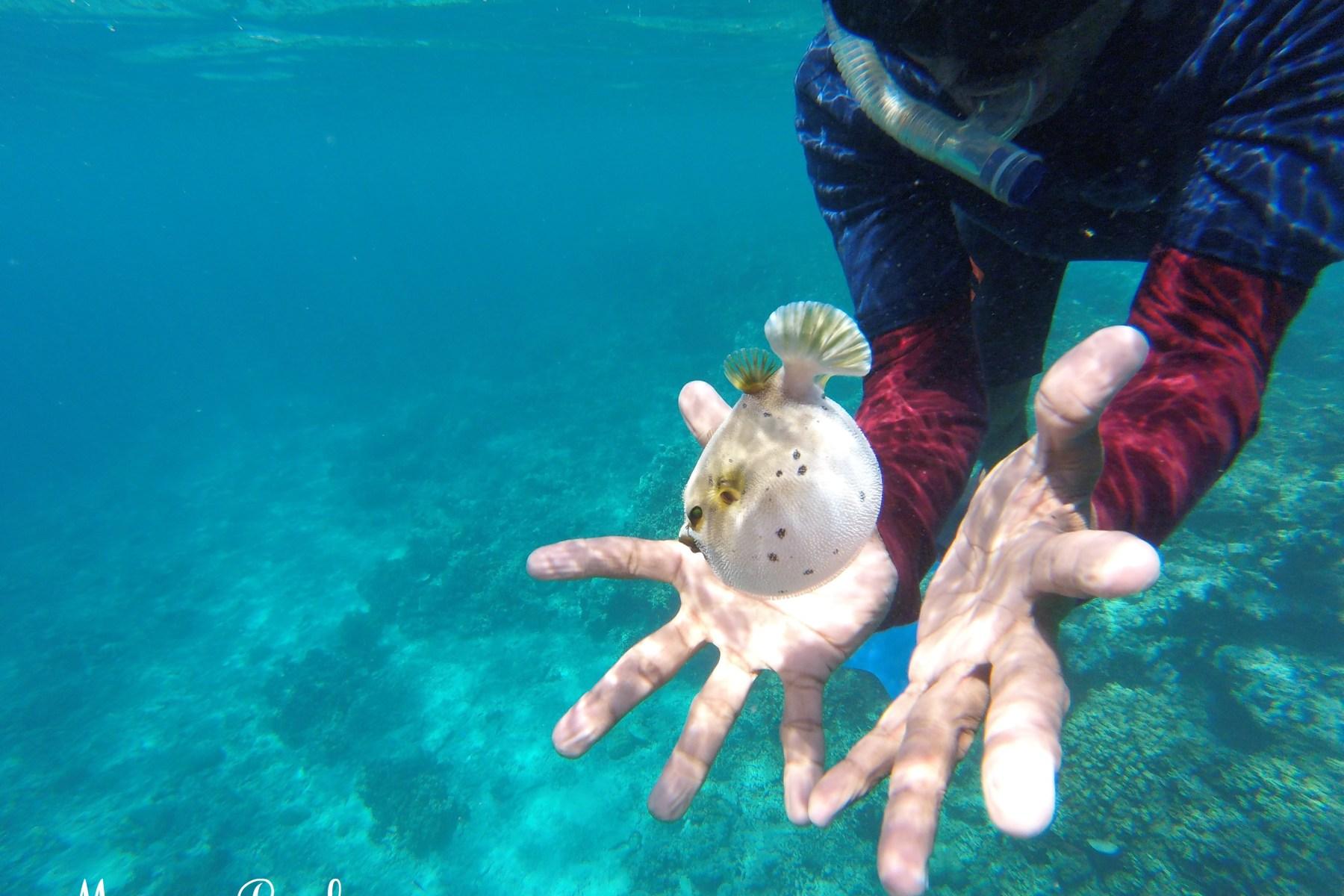 Poisson ballon en Indonésie, quel budget activités pour partir en Indonésie ?