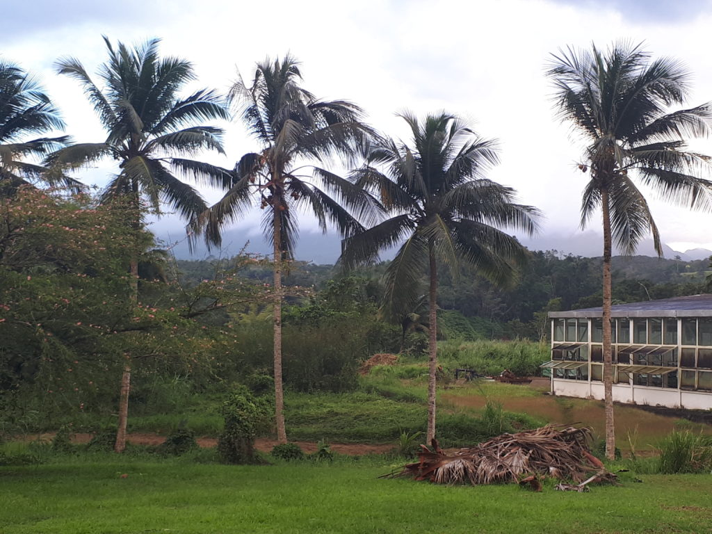 Paysage typique guadeloupe