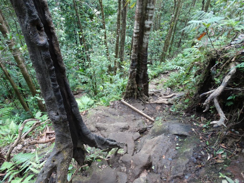 Chemin glissant chute du carbet