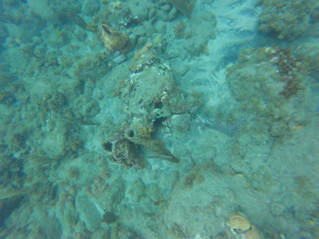 coraux plage de malendure
