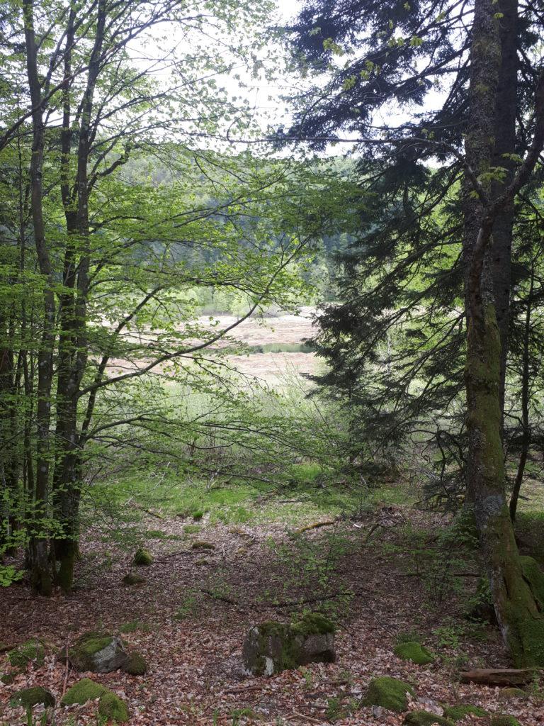 Tourbière la bresse Vosges