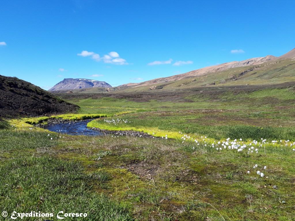 Coton et mousse d'Islande