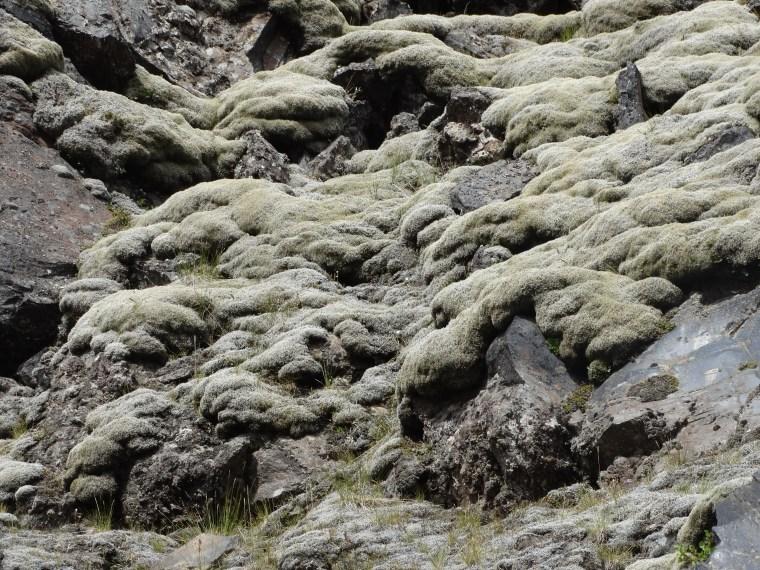 Les mousses tendres d'Islande