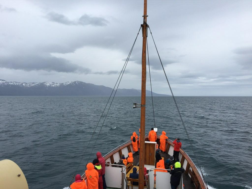 Navigation en bateau pour observer les baleines à bosse