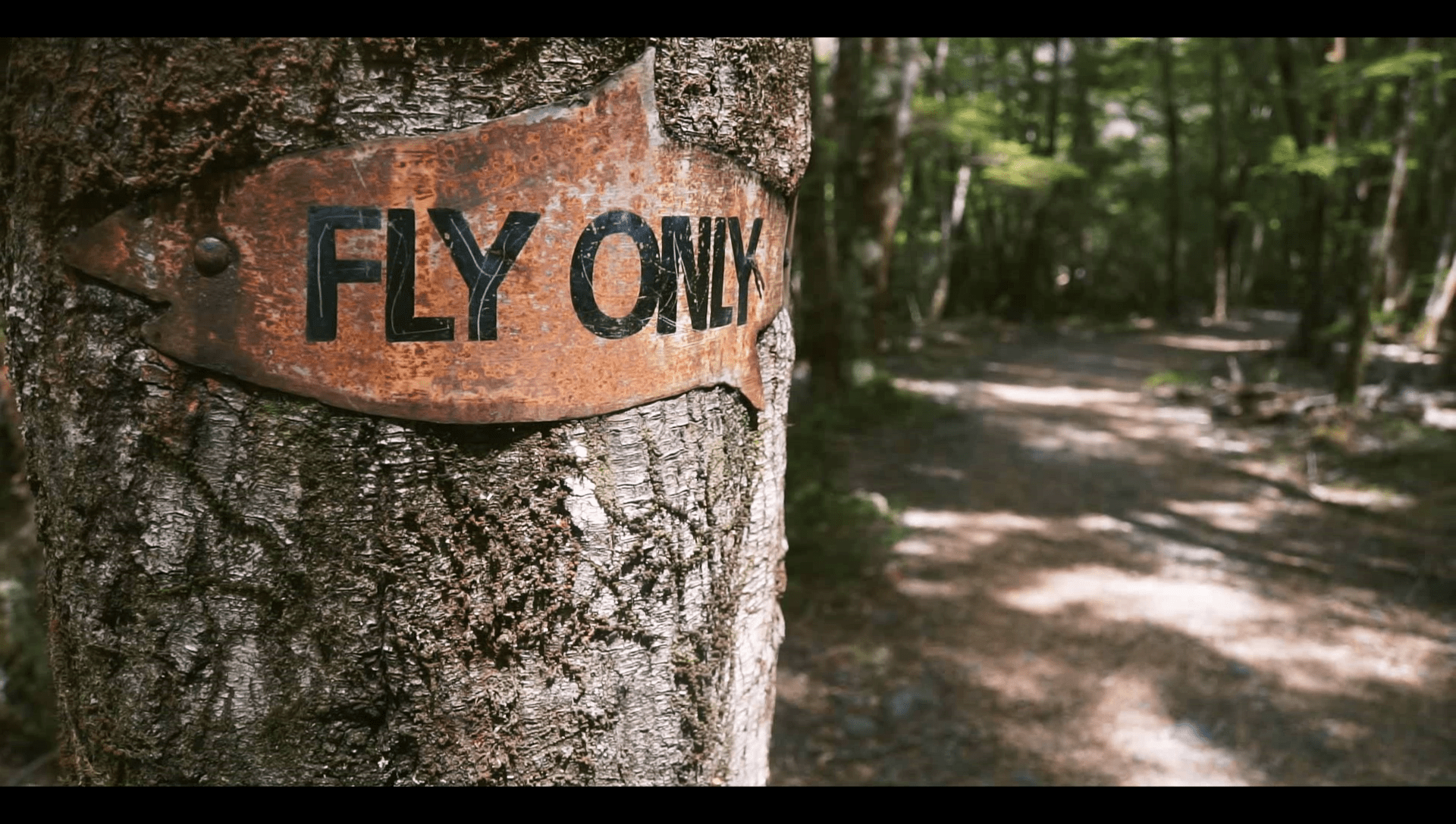 Fly Fishing Nation Video Contest