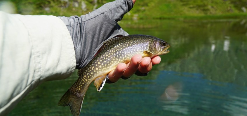 Fly Fishing the Swiss Alps guided by Firebelly
