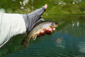 Fly Fishing the Swiss Alps - brook trout