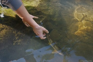 Release of a small trout