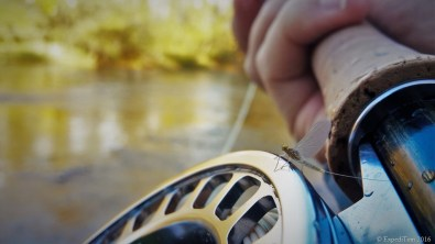 Male Mayfly (Scambus) on the Sage reel