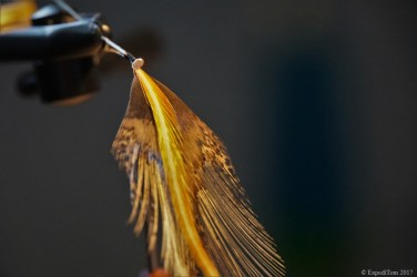 Vibrant colour mix of Coq de Leon and bronze dry fly hackle