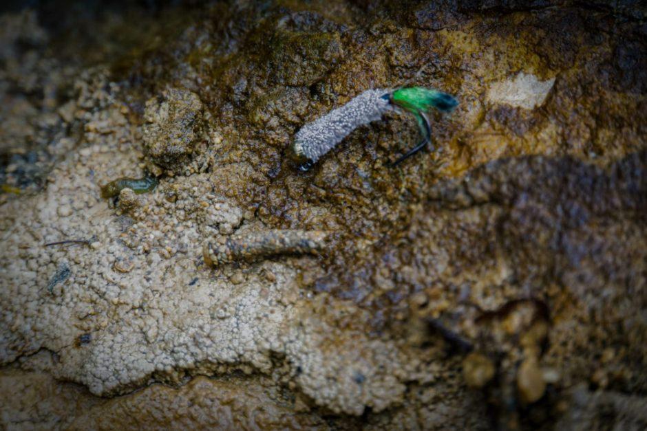 Match the hatch - a caddis fly larva and its imitation.