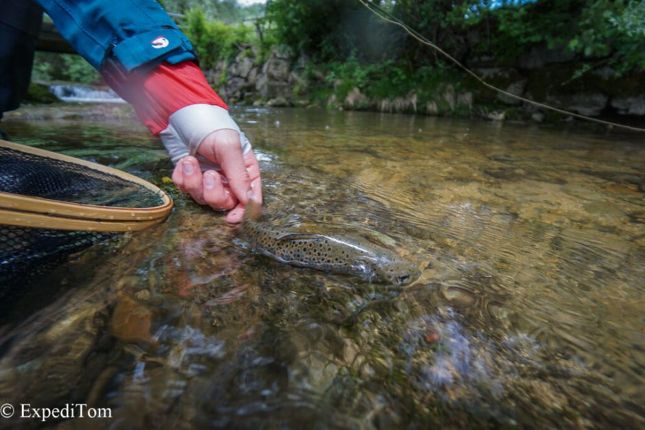 Releasing the small trout back to its habitat.