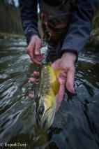 Stunningly beautiful trout