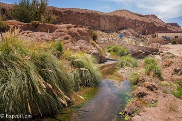 Oasis in the Atacama Desert