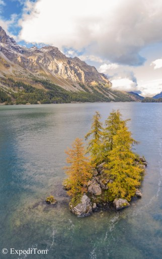 Golden larch trees in October