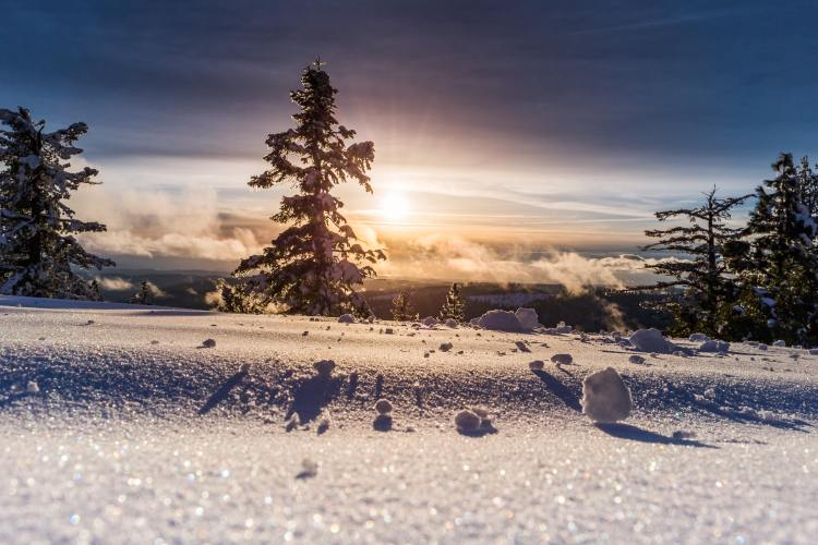 Snowy landscape with a sunrise behind four pine trees with glistening snow.