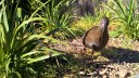 Weka in Picton