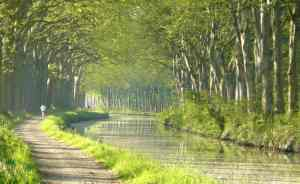 Plane trees lining the Canal du Midi