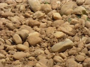 "Famous ""soil"" of Chateauneuf du Pape"
