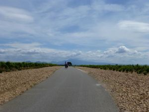 Cycling through the famous Chateauneuf du Pape vineyards