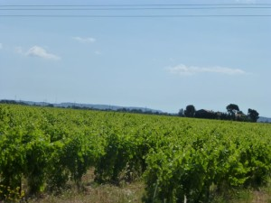 Vineyards enroute to Lezignan Corbieres