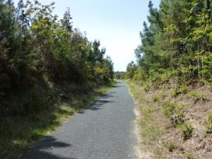 More pine forests along La Velodyssee